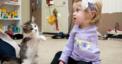 Niña que perdió un brazo por cáncer, adopta a un gatito de solo 3 patas