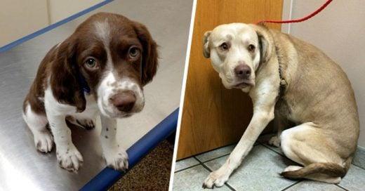 Adorables perros que están aterrorizados por ir al veterinario