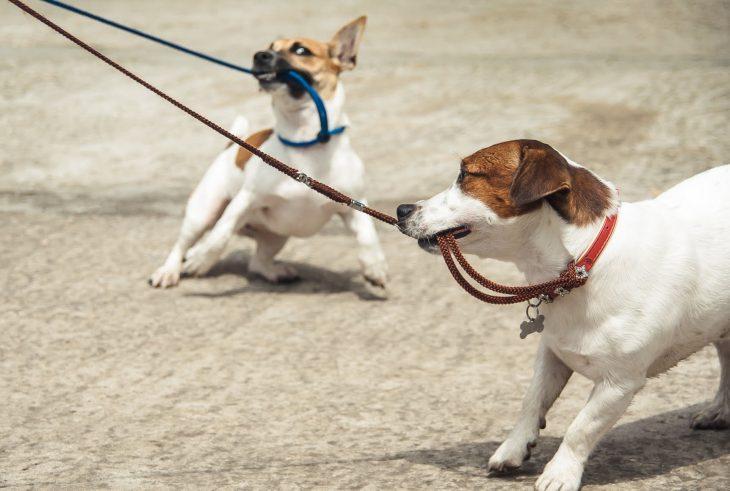 perritos jalados con correa