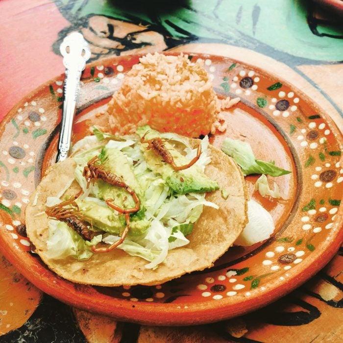 Tacos de alacrán