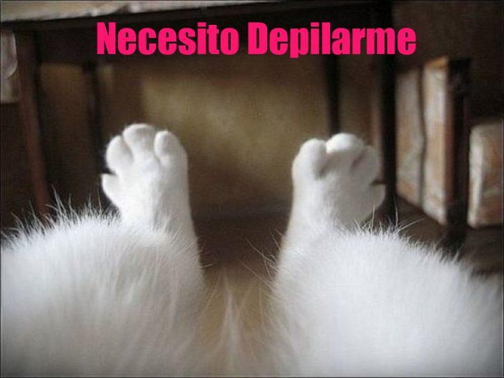 Meme Patas de un gato con la leyenda que necesita depilarse