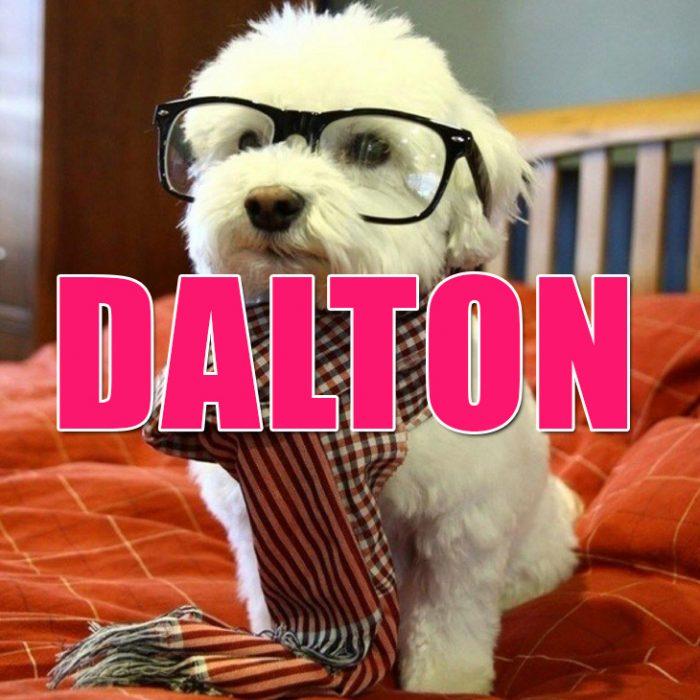 Perro blanco con lentes y bufanda