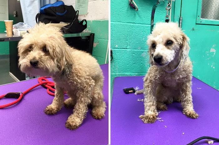 Perro rescatado antes y después del corte de cabello