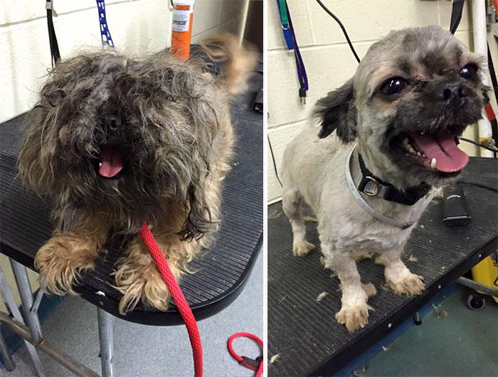 Antes y después de un perro del refugio