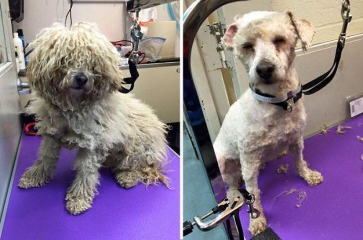 Transformación de un perro rescatado