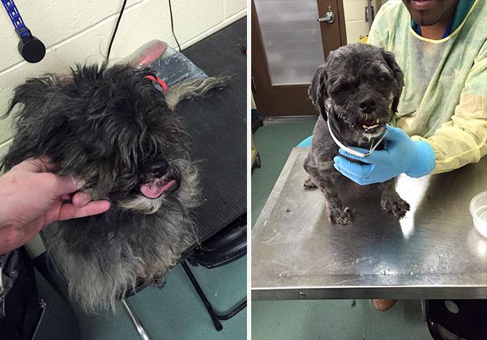 Transformación de perro