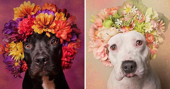 """""""Pit Bull Flower Power"""" El proyecto que demuestra que los perros Pit Bull también merecen ser amados"""