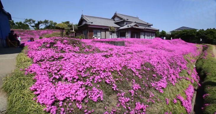 jardin de flores en la casa de kuroki