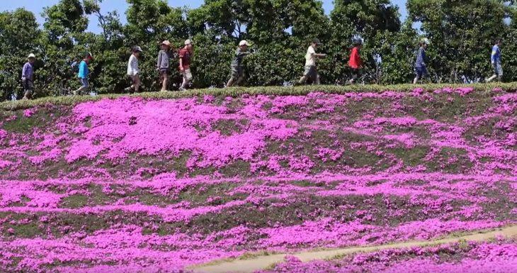 niños caminando en jardin de flores