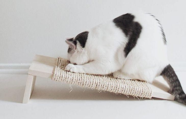 juguete para que el gato juegue y no rasgue cortinas ni muebles