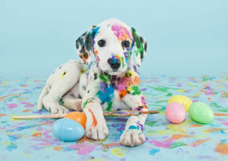 perro cachorro dalmata jugando con huevos de pascua y pintura