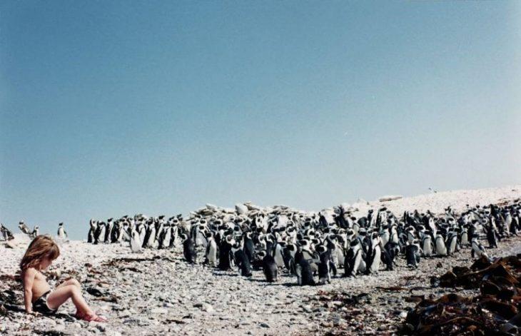 niña tippi sentada al rededor de pinguinos