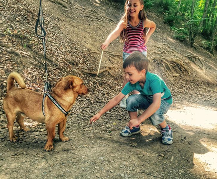 niños jugando con un perro en el campo bosque
