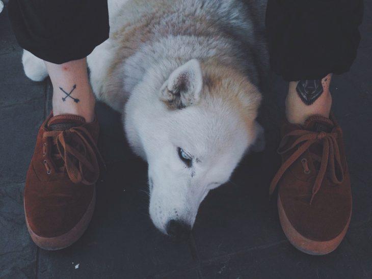 perro blanco sentado en los pies de persona zapatos tatuajes