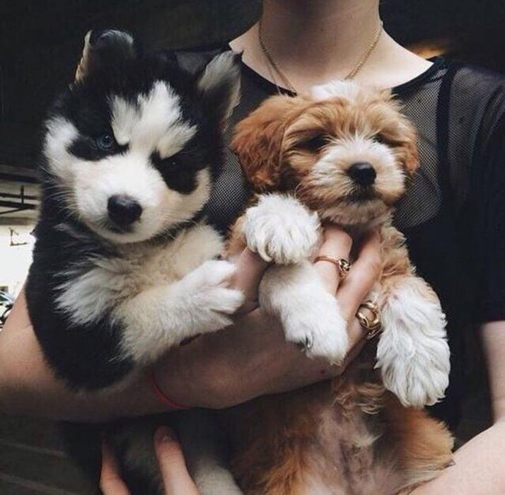 par de perritos en la mano de una chica