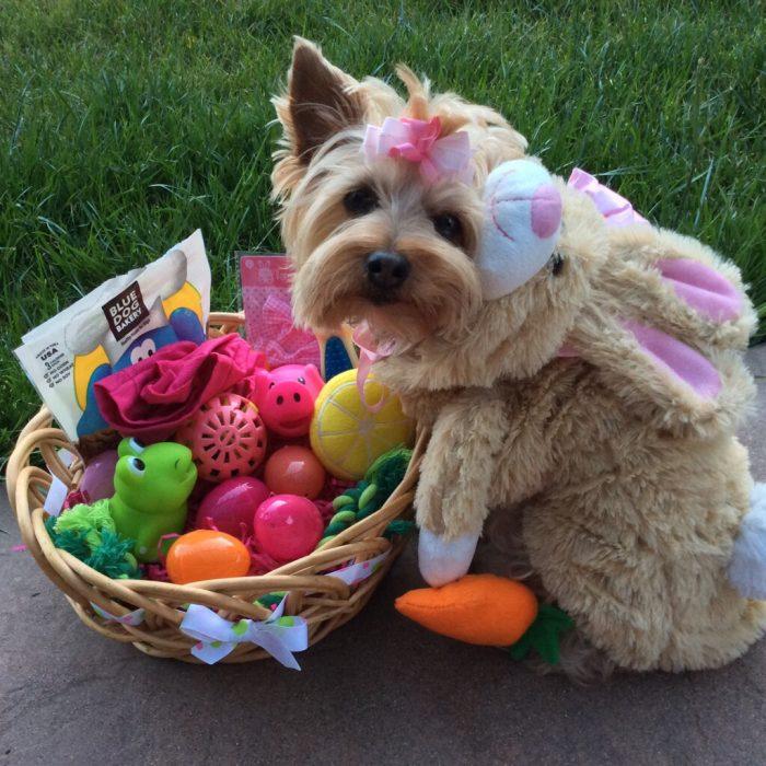 perro vestido con ropa de bebe huevos de pascua consentido