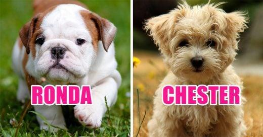 20 Ideas de nombres para perros que te ayudarán a elegir el mejor para tu mascota