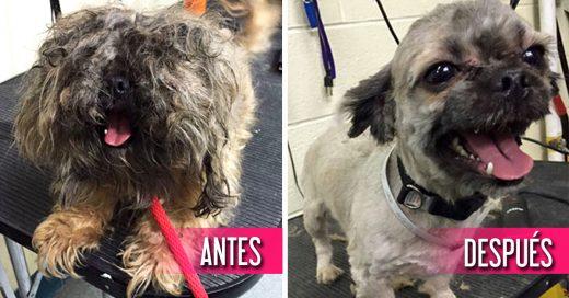 Este hombre les corta el pelo gratis a los perros viejos de los refugios para ayudarlos a encontrar hogar