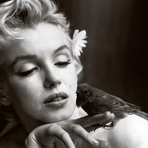 Marilyn monroe con un ave