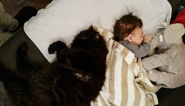 Gato acostado a un costado de un bebé