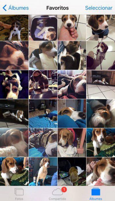 Captura de pantalla perros