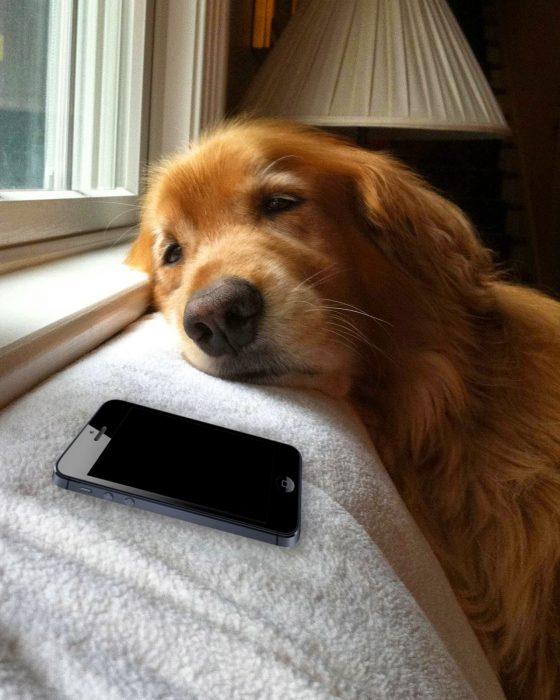 Perro dormido junto a un celular