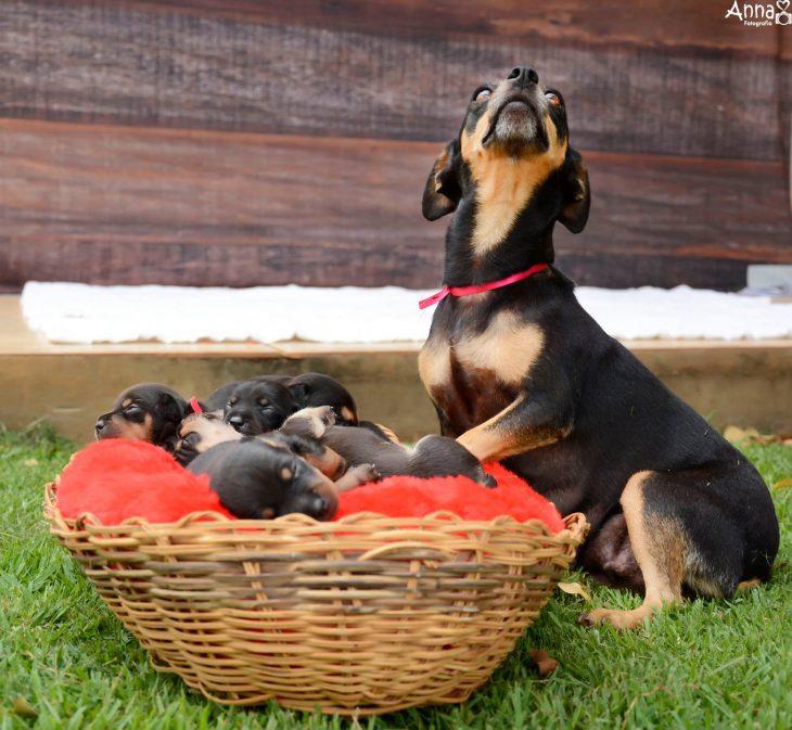 Adorable perra posando con sus cachorros