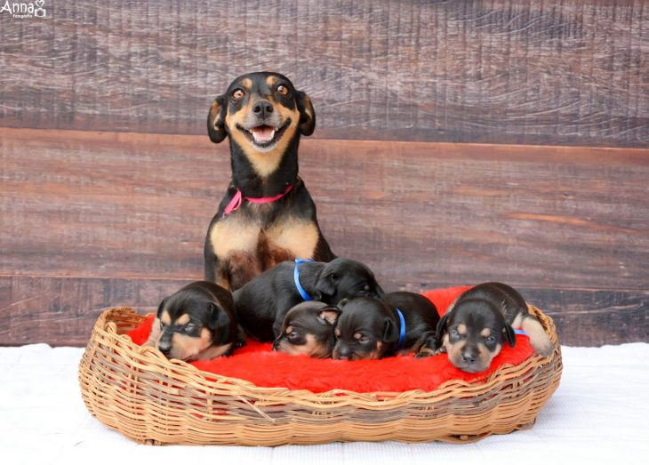 Lalica y sus cachorros