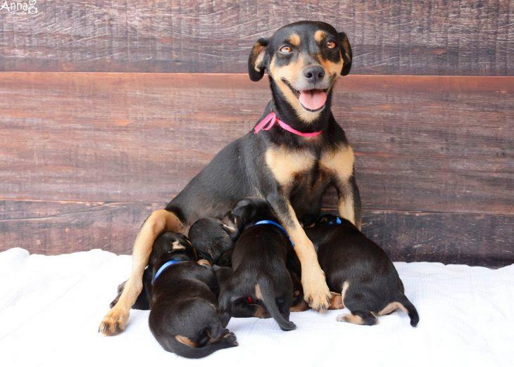 Lalica, perra posando con sus cachorros
