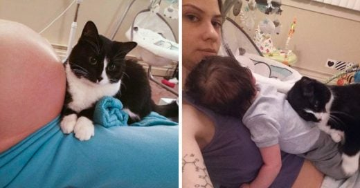Gato se enamora de bebé antes de nacer