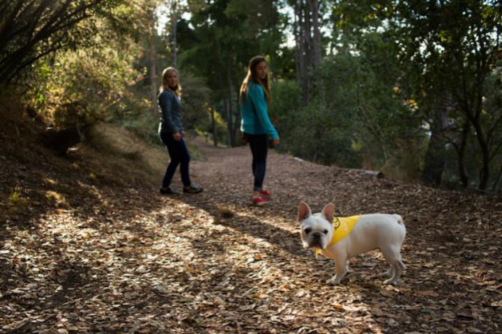mujeres en el campo y perro