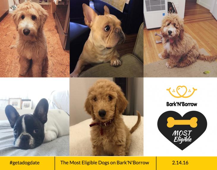 aplicación para perros catalogo de perros bark n borrow screen shot