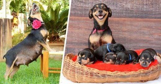 La adorable perrita de la sesión de maternidad que conmovió al mundo ¡Ha dado a luz a 5 cachorros!