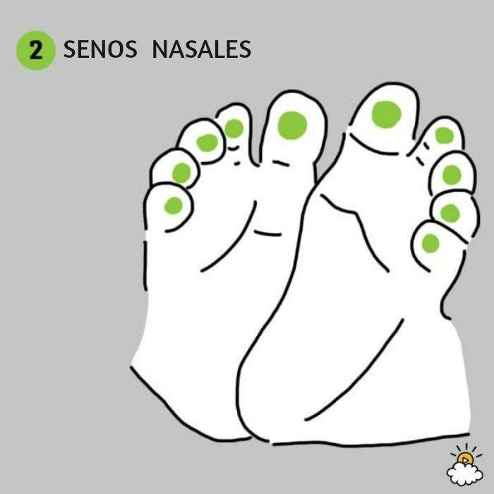 ilustración senos nasales reflexiología de pies para salud de tu bebé