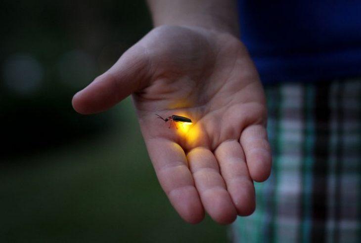 mano con luciérnaga