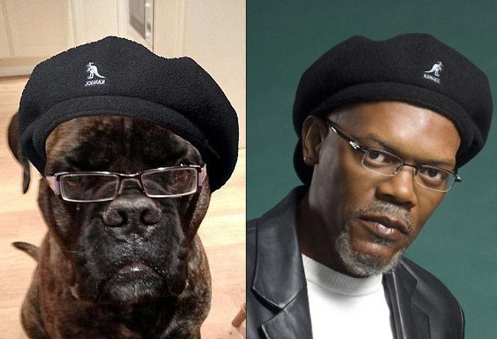 Samuel L. Jackson y perro parecido