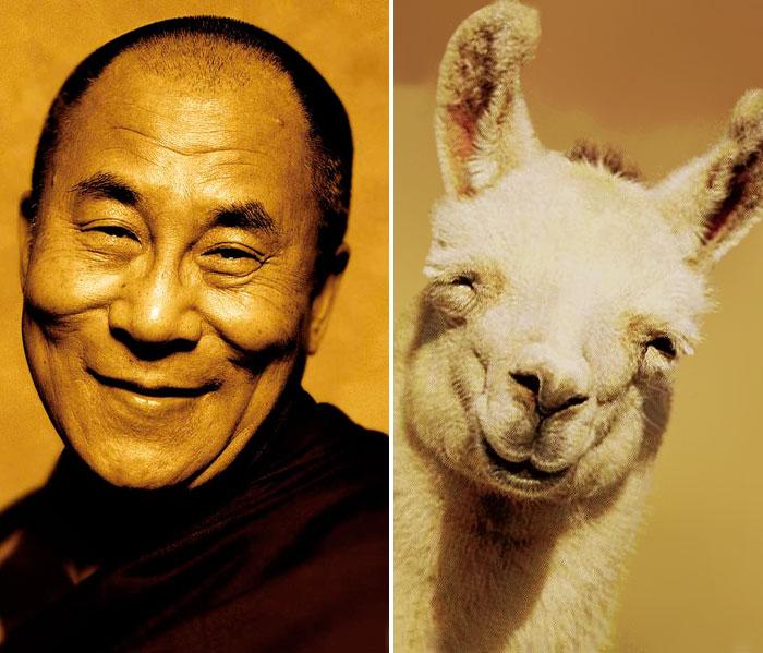 dalai lama y llama sonriendo