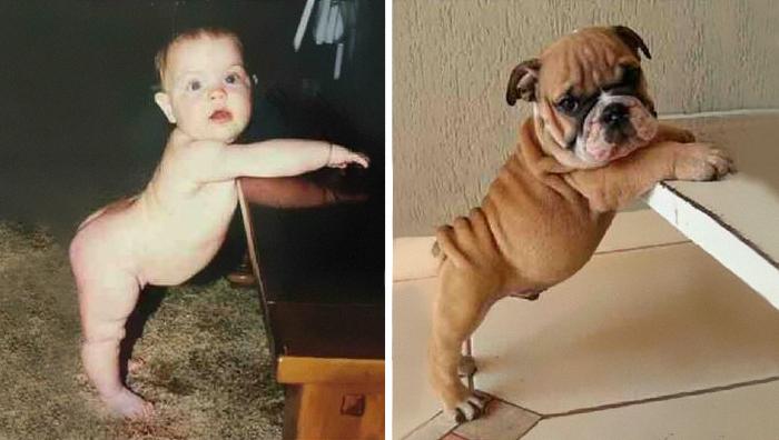 bebé en misma pose que perrito