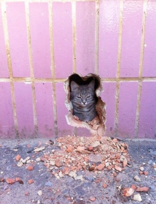 gato en pared con grieta con su silueta