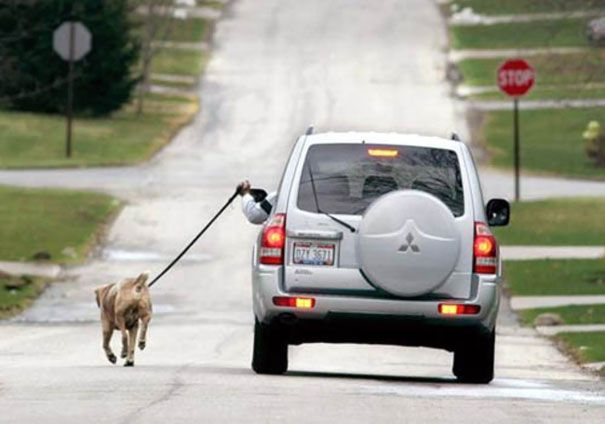 persona pasea perro en coche