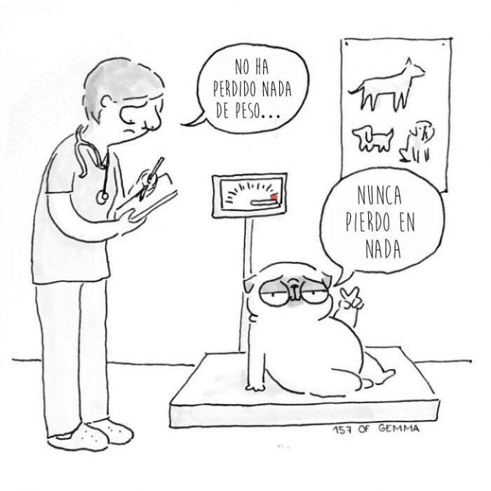 perro pug en la bascula con doctor