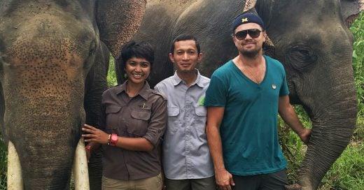 Leonardo DiCaprio lucha por salvar a los elefantes en Indonesia