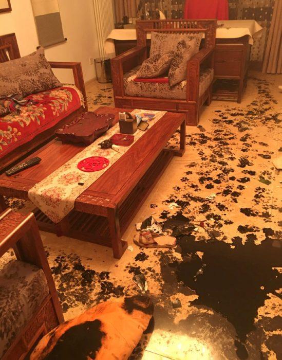 Sala de un departamento sucio gracias a un perro Husky
