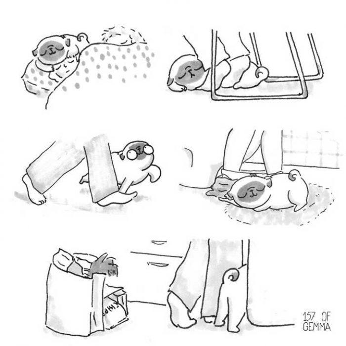 ilustracion de pies y perro pug siguiendo