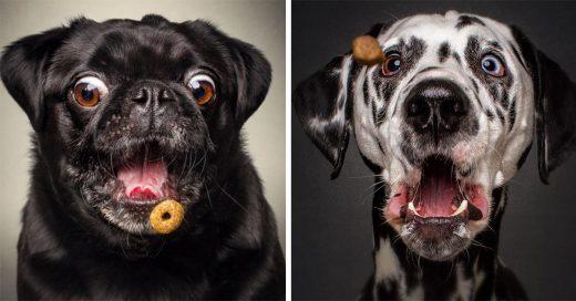 Divertidas fotografías de captan lo gracioso que se ven los perros intentando atrapar su comida