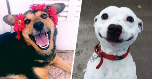 10 Increíbles y felices cosas que sólo quienes han adoptado un perro pueden vivir