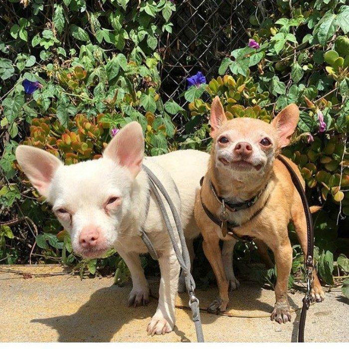dos perros pequeños sonrien amigos