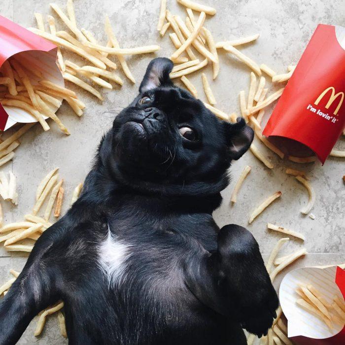 perro negro en el suelo con papas a la francesa