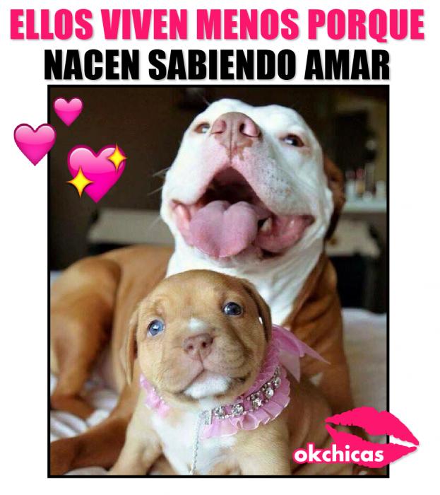 meme ok chicas perro grande con cachorro y moño rosa