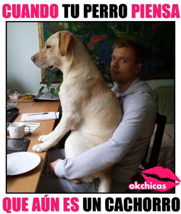 meme ok chicas hombre sentado en la mesa con perro en sus piernas